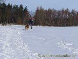 image 20130126_wolfgarten_006-jpg