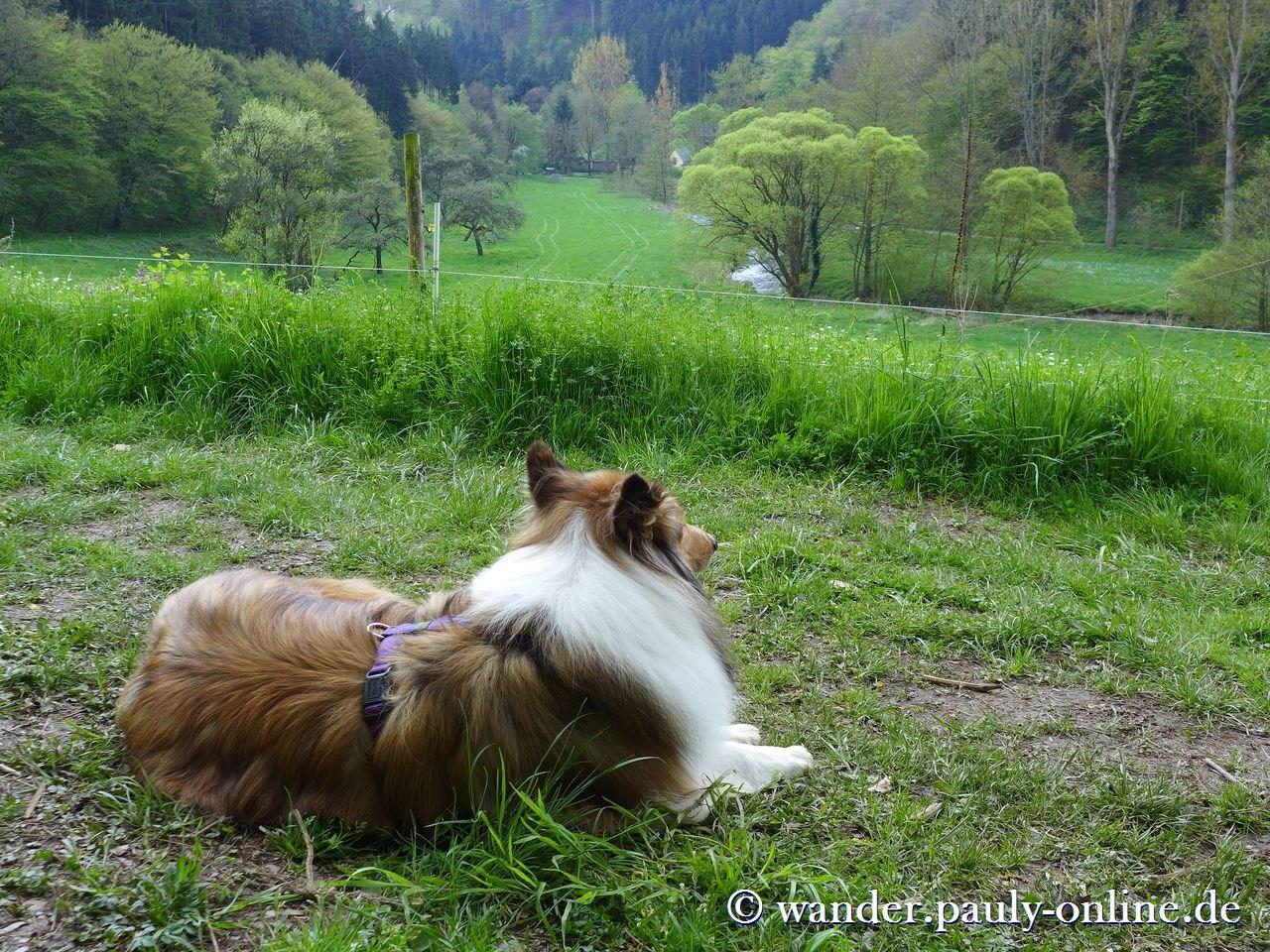 Traumschleife Murscher Eselsche