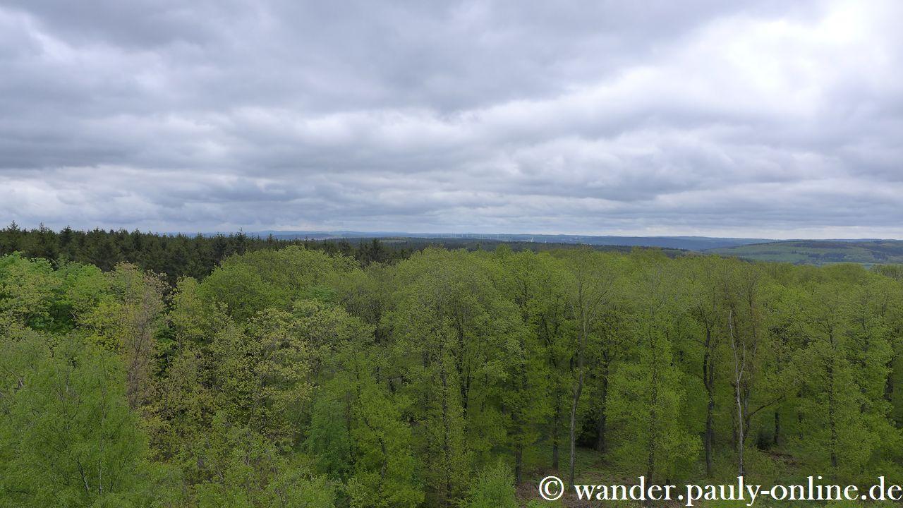Nationalpark Eifel T7 - Blick vom Feuerwachturm