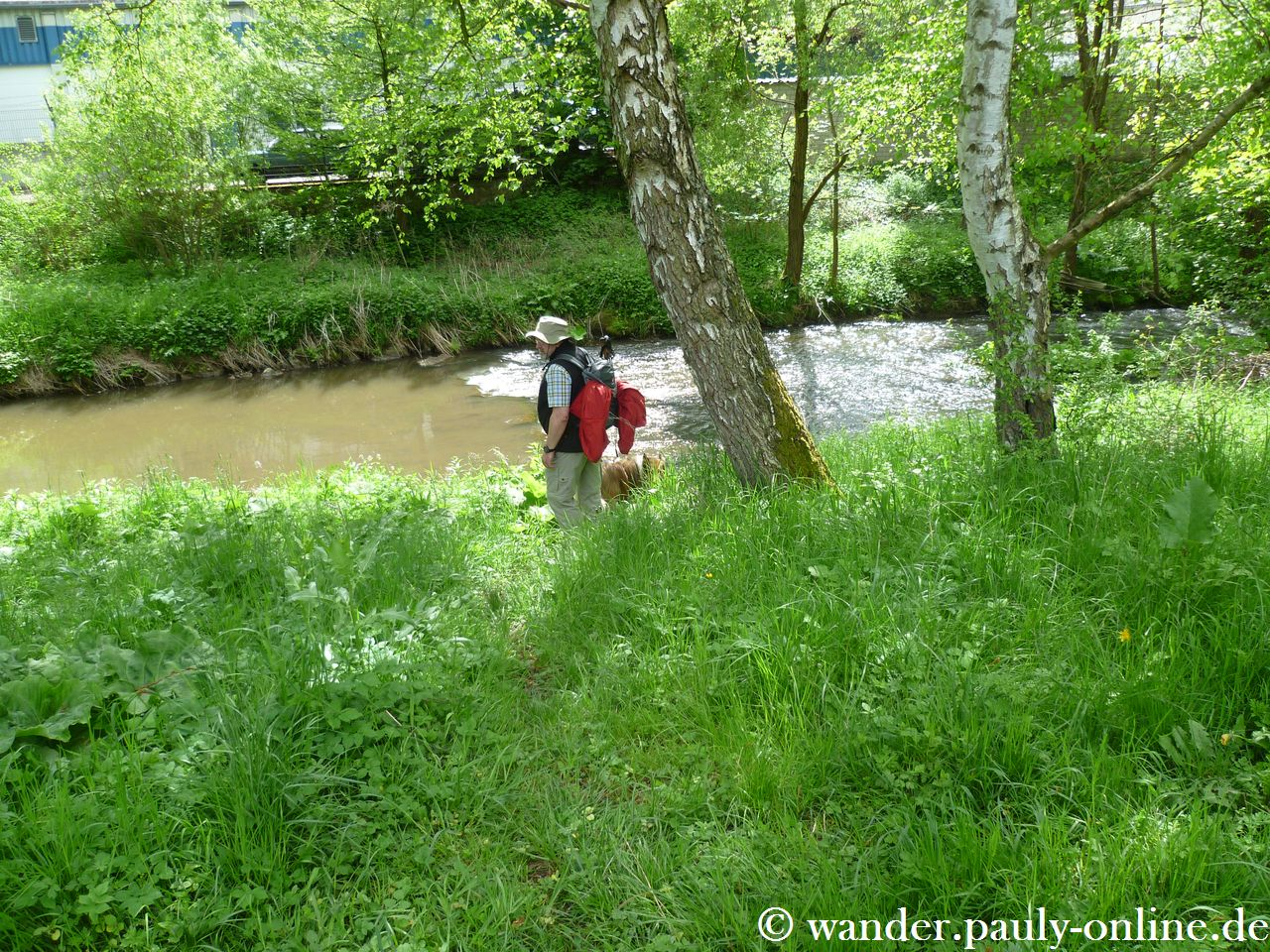 Nationalpark Eifel T7 - Urft