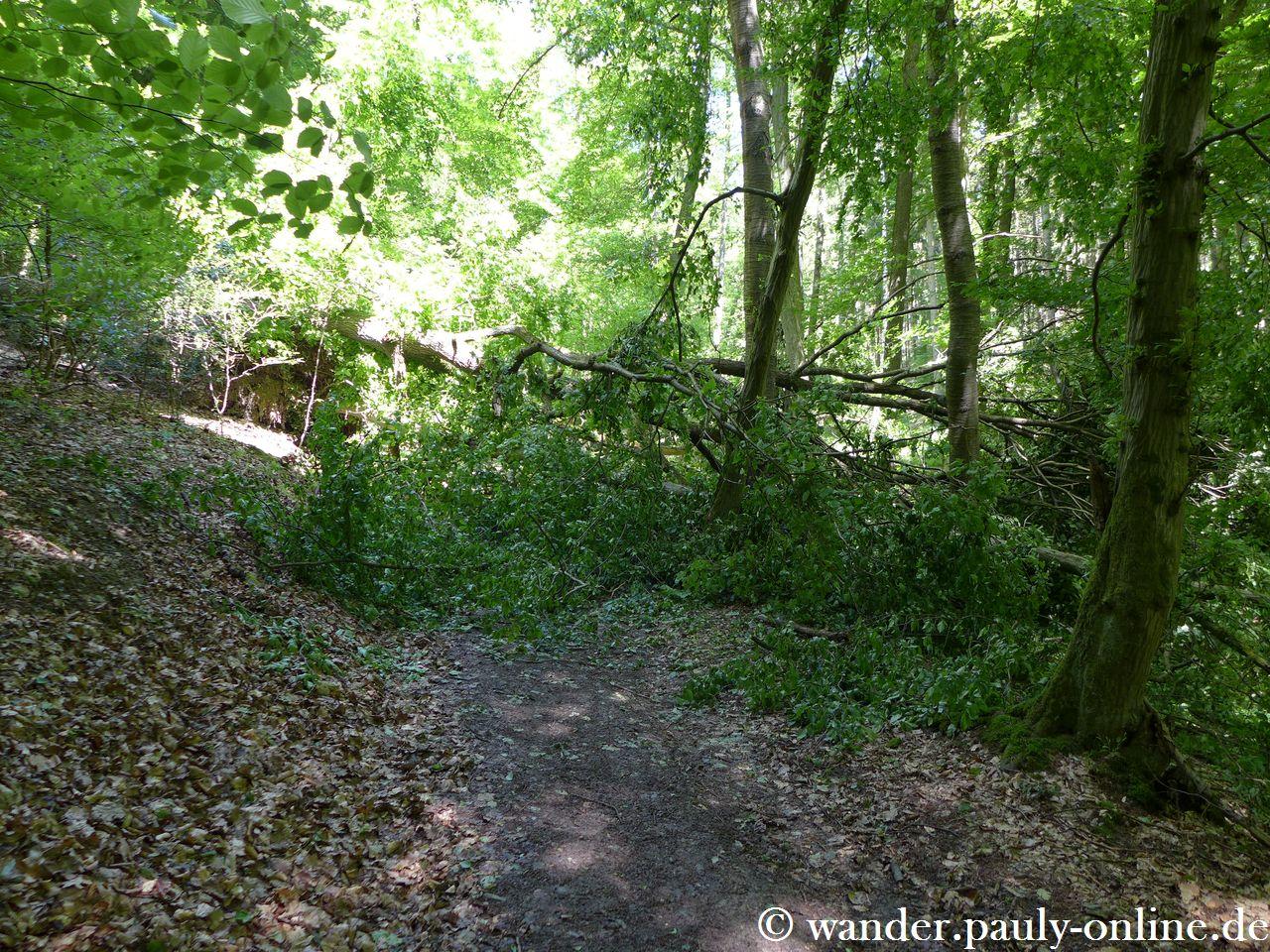 Ein umgestürzter Baum versperrt den Weg