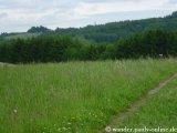 image 20130615_wanderather_025-jpg