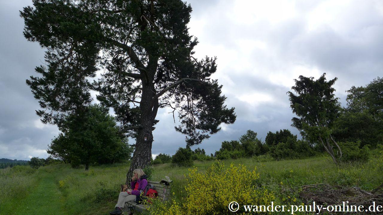 Traumpfad Virne-Burgweg - Schafberg