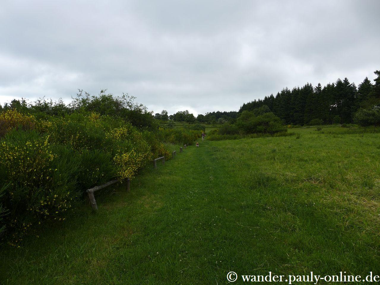 Traumpfad Virne-Burgweg - Blumenrather Heide
