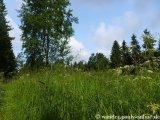 image 20130626_pingen_060-jpg