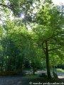 image 20130630_foerstersteig_148-jpg