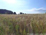image 20130804_spessart_024-jpg
