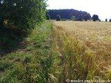 image 20130804_spessart_025-jpg