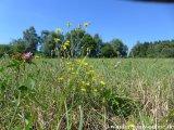 image 20130817_saarland_151-jpg