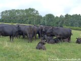 image 20130818_saarland_158-jpg